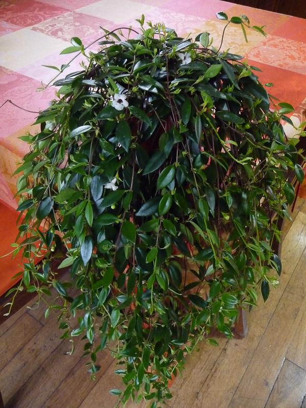 les plantes d 39 int rieur lumi re et humidit d coration jardin. Black Bedroom Furniture Sets. Home Design Ideas