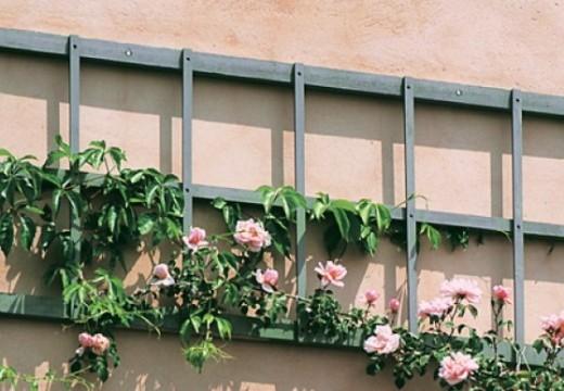 Plantes grimpantes aux multiples fonctions