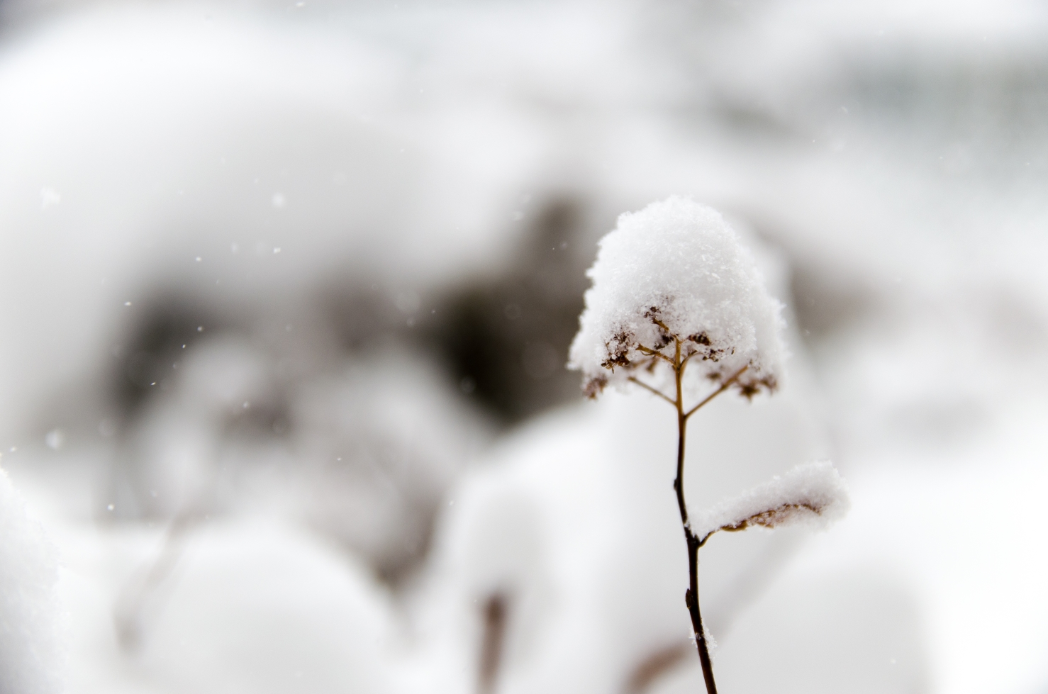 proteger-ses-plantes-froid