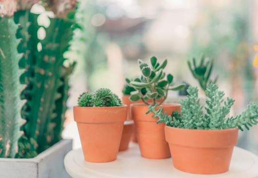 Comment choisir ses plantes selon le style de sa déco ?