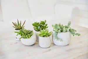 Petits pots de plantes grasses sur une table blanche
