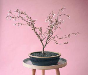 Bonsaï aux fleurs roses posé sur un tabouret en bois et métal, devant un mur rose