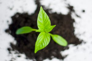 proteger-ses-plantes-hiver