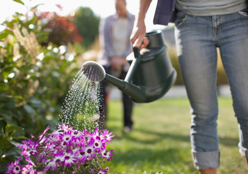 Comment bien arroser son jardin d'ornement ?