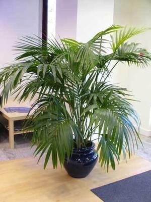 Les plantes d'intérieur : lumière et humidité