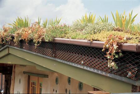 Environnement : avantages des toits verts