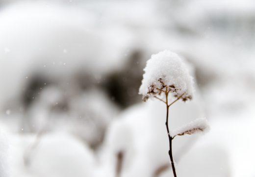 Comment protéger ses plantes pendant l'hiver ?