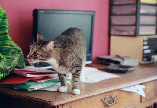 Préparer sa maison pour l'arrivée d'un chat